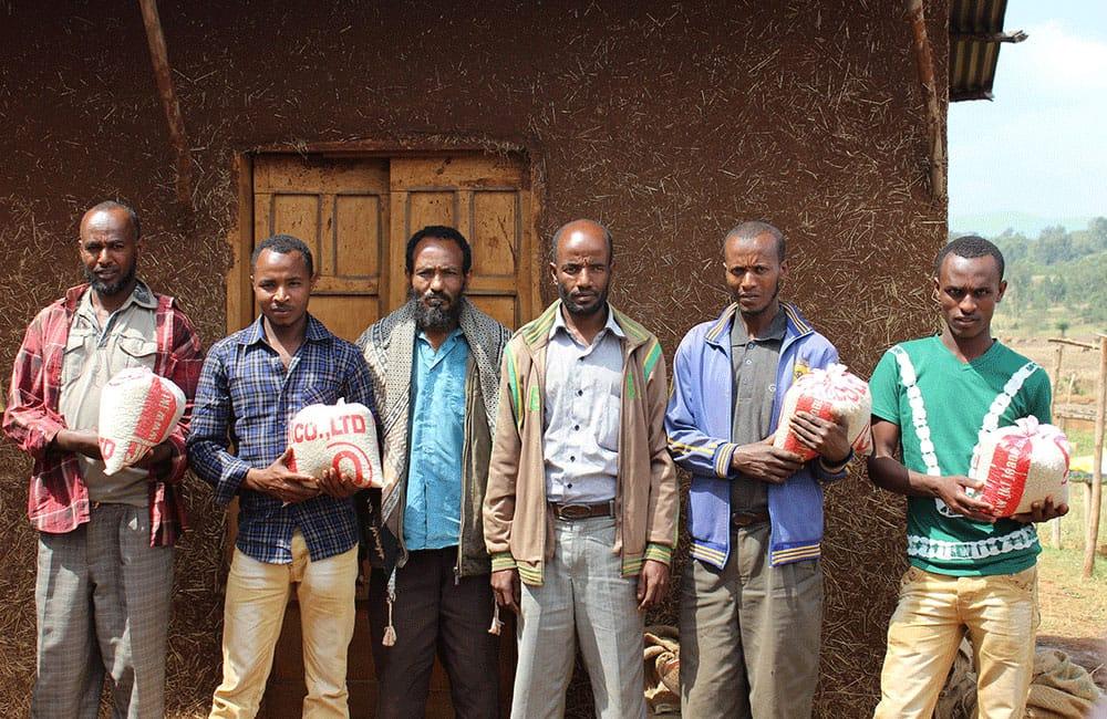 Biftu Gudina un café de especialidad del corazón de Etiopía. Esta cooperativa se encuentra en el distrito de Agaro, en Jimma