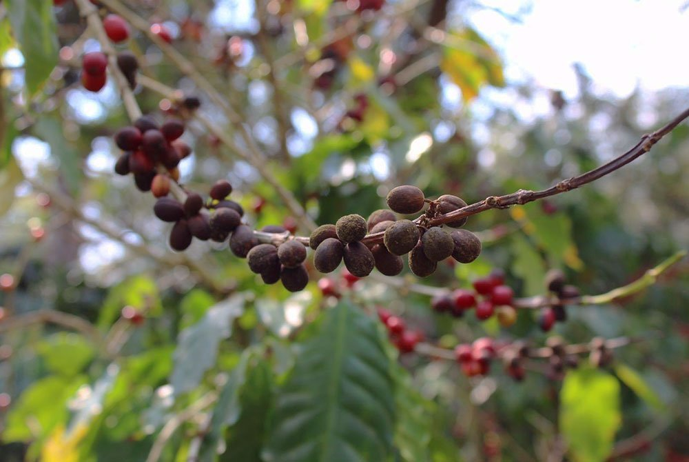 La Bolsa in Guatemala is more than specialty coffee 11