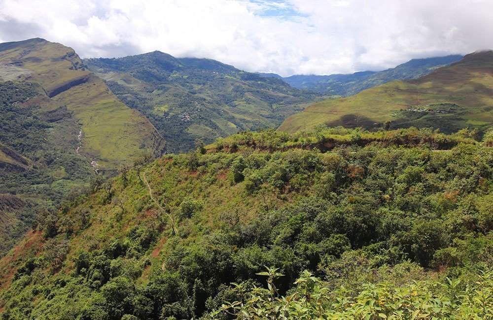 Peruvian coffee from producer Marcial Olivera. View of the coffee plantations