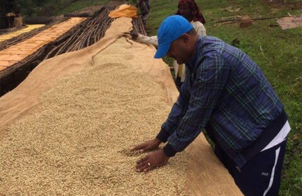 Great Ethiopian coffee thanks to the effort of Binitu Ambela´s smallholders