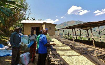 Matyazo un gran café de especialidad de Ruanda