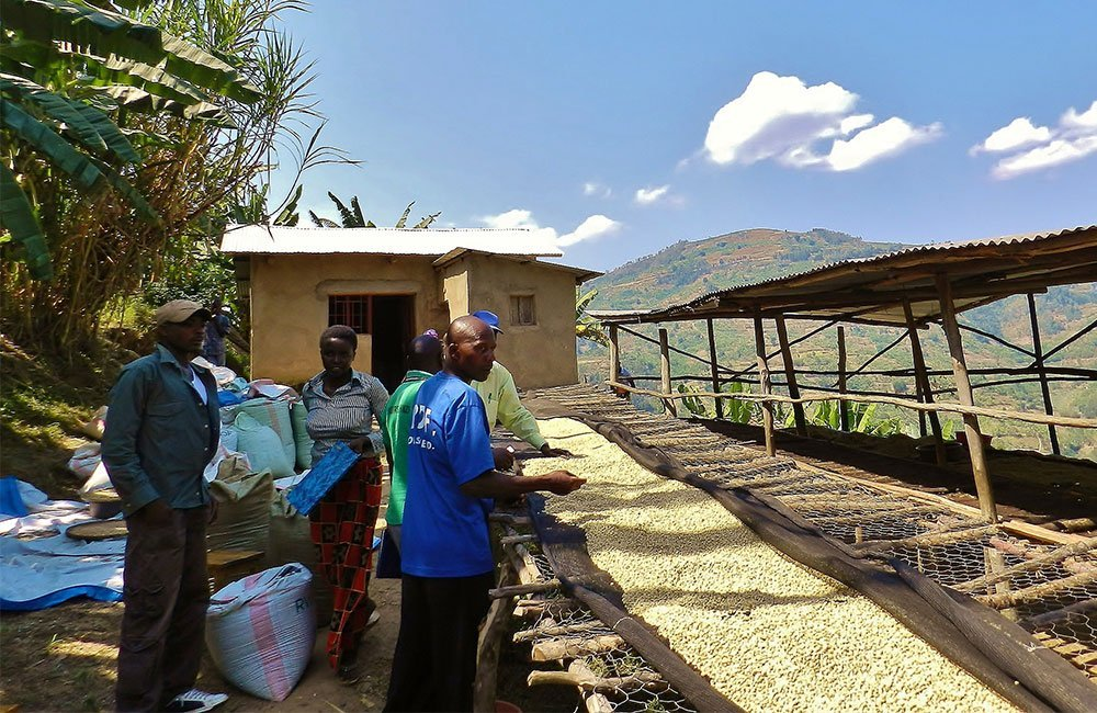 Matyazo is one of Rwanda's great Specialty Coffees