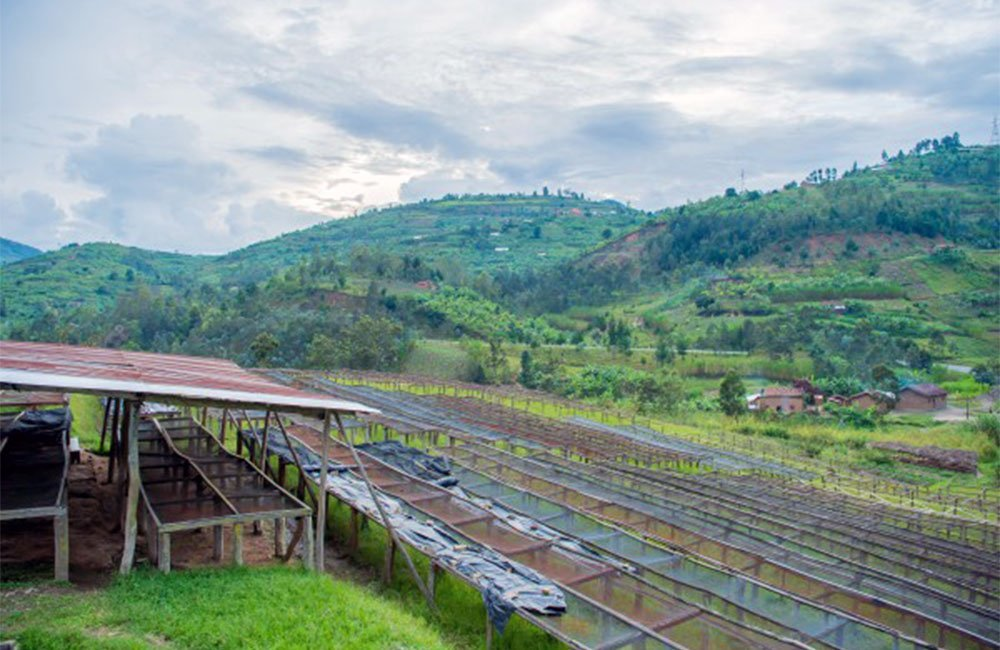 Ngororero - Ruanda 6