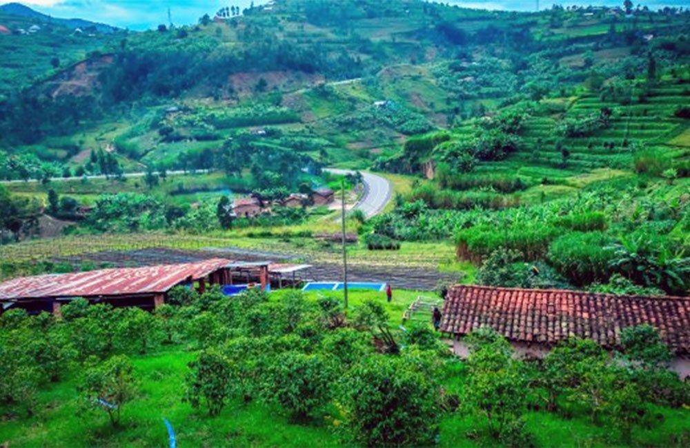 Ngororero - Ruanda 4