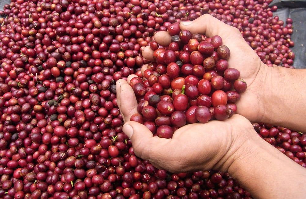 Qué es el café de finca y por qué lo deberías probar
