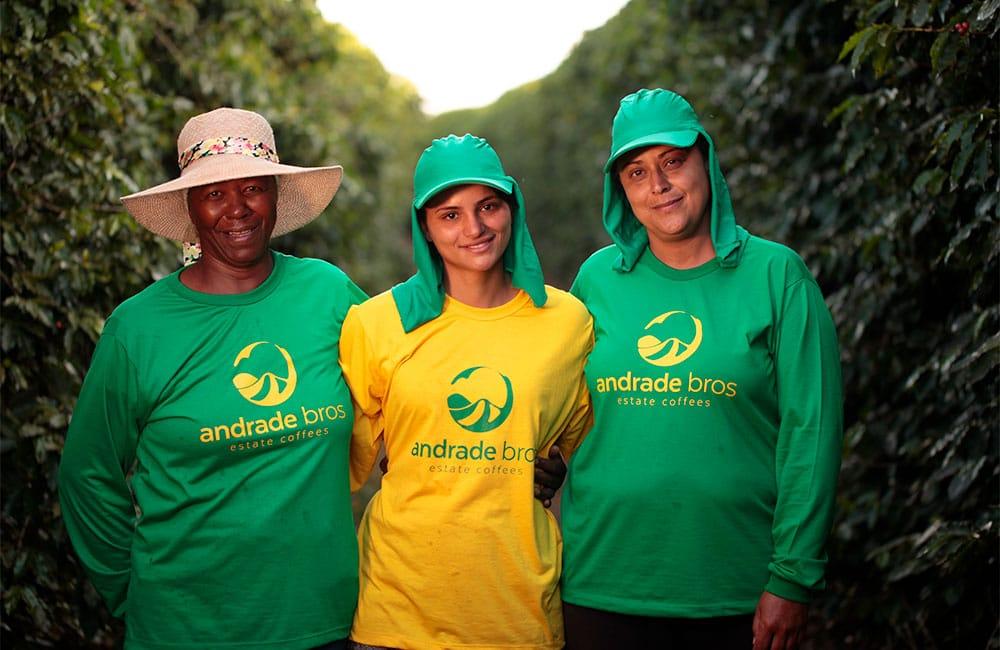 São Silvestre Brasil. Variedad Yellow Icatu Cosecha de 2019