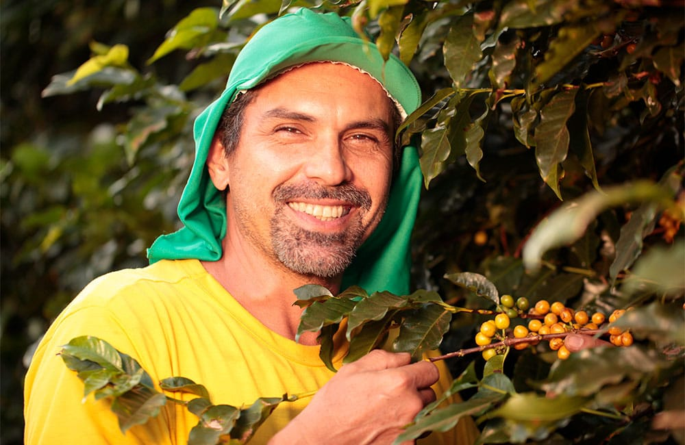 Specialty coffee from Sao Silvestre farm in Brazil
