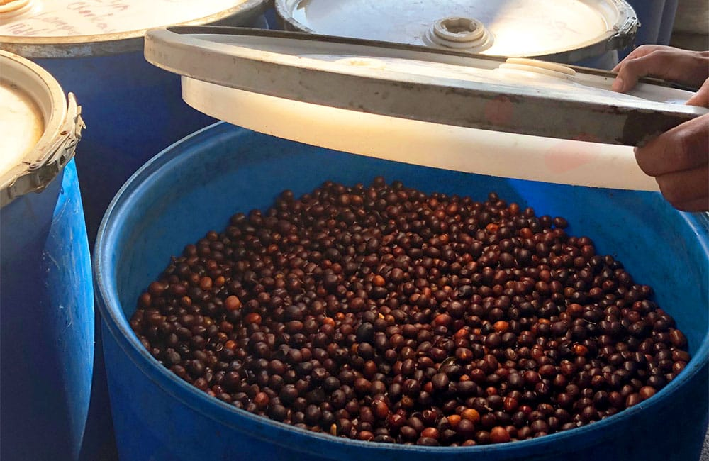 Specialty coffee from Finca Dayana in Honduras 2020 harvest