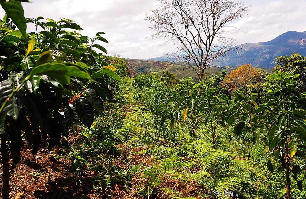 El Palto Mujeres Perú café de especialidad cosecha 2020