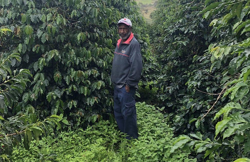 Baroida farm specialty coffee from Papua New Guinea