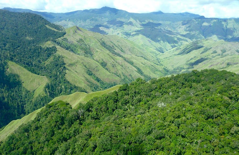 Baroida café de especialidad de Papúa Nueva Guinea