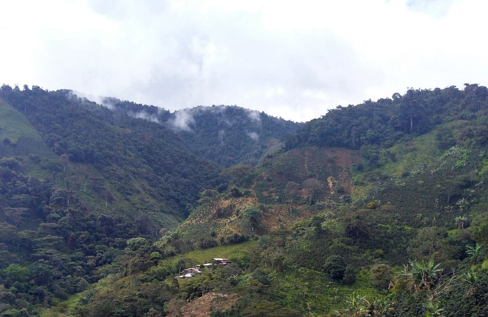 Pink bourbon sweet and complex from Las Delicias farm in Colombia