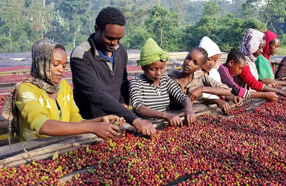 Un café a la altura de los pequeños productores de Reko