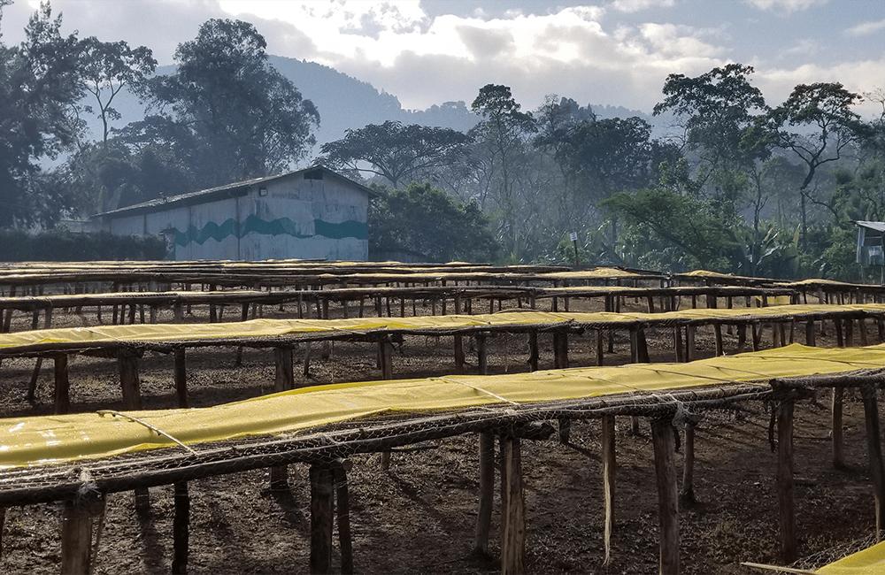 Un café de altura de los pequeños productores de Reko
