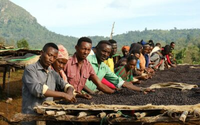 Daanisa Is a Tree and a Specialty Coffee