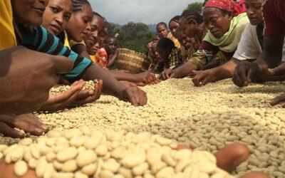 Idido Coffee from Yirgacheffe Region