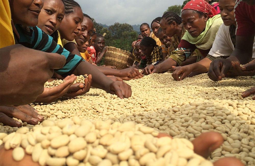 Idido Etiopía cosecha 2021 para filtro y espresso
