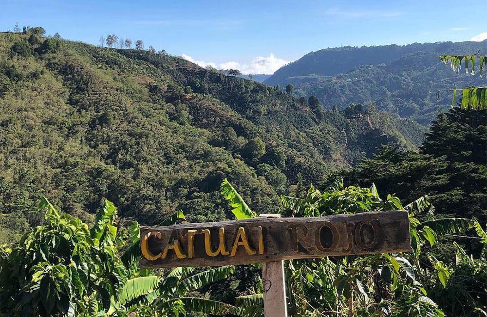 Santa Rosa 1900 Costa Rica para Filtro y Espresso. Ganador del Cup of Excellence en repetidas ocasiones en los últimos años.