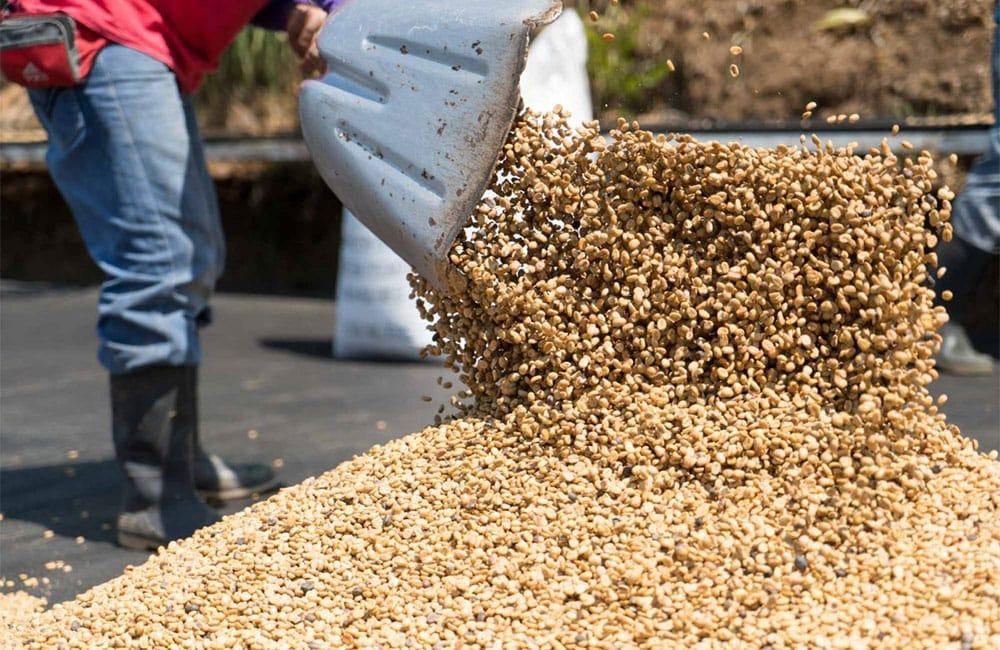 Coffee El Perezoso from Costa Rica harvest 2021